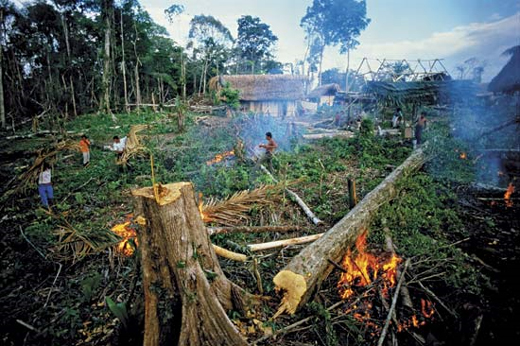 forest pollution Forests around the world are affected by air and water pollution, produced from industrial and commercial activities besides the pollution caused by oil spills, toxic by-products, and mining accidents, rainforests are seriously degraded by air pollution.